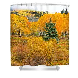 The One That Stands Out  Shower Curtain