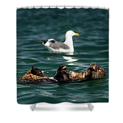 The Otter And The Mooch 3 Shower Curtain