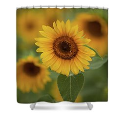 The Patch Of Sunflowers Shower Curtain