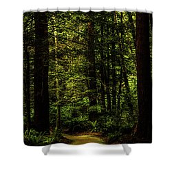 Shower Curtain featuring the photograph The Path by TL Mair