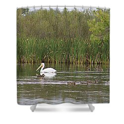 Shower Curtain featuring the photograph The Pelican And The Ducklings by Alyce Taylor