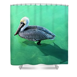 The Pelican And The Shark Shower Curtain