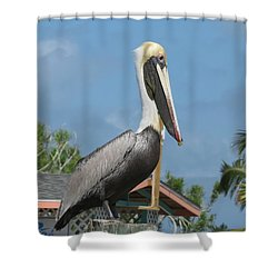 The Pelican Shower Curtain