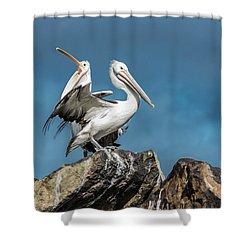 The Pelicans Shower Curtain by Racheal Christian