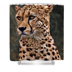 The Pensive Cheetah Shower Curtain by Chris Lord