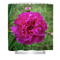 Shower Curtain featuring the photograph The Peonie by Mark Dodd