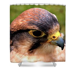 The Peregrine Shower Curtain by Stephen Melia
