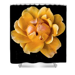 The Perfect Rose Shower Curtain by Venetia Featherstone-Witty