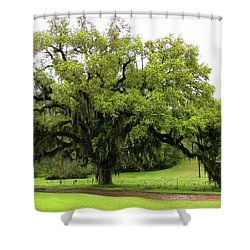 The Perfect Tree					 Shower Curtain