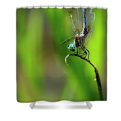 Shower Curtain featuring the photograph The Performer Dragonfly Art by Reid Callaway