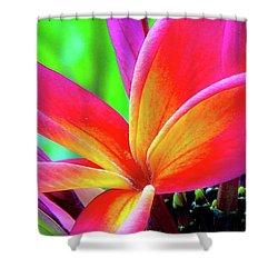 The Plumeria Flower Shower Curtain