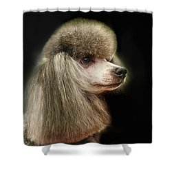 The Poodle Is A Breed Of Dog, One Of The Most Common Breeds In The Present. Shower Curtain