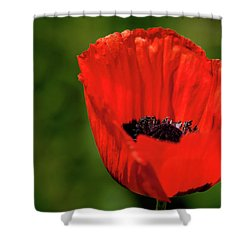 The Poppy Next Door Shower Curtain