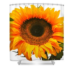 The Prettiest Sunflower Shower Curtain