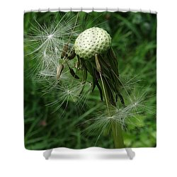 The Promise Of Renewal 1 Shower Curtain