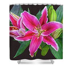 The Pulchritude Of Lady Lily Shower Curtain