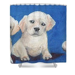 The Pups 1 Shower Curtain by Roger Wedegis