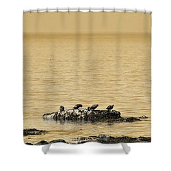 Shower Curtain featuring the photograph The Quatuor - Gold by Aimelle