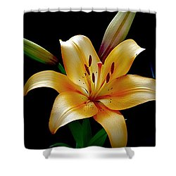 The Queen Lily Shower Curtain