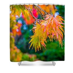 The Rainy Bunch Shower Curtain by Ken Stanback