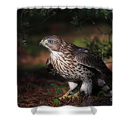 The Raptor Shower Curtain by Mircea Costina Photography
