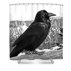 The Raven - Black And White Shower Curtain