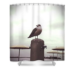 The Reason Birds Can Fly Shower Curtain