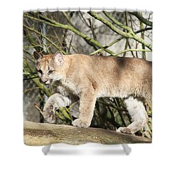 Shower Curtain featuring the photograph The Red Carpet by Laddie Halupa