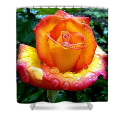 The Red Gold Rose Shower Curtain by Will Borden