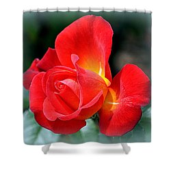 Shower Curtain featuring the photograph The Red Rose by AJ  Schibig