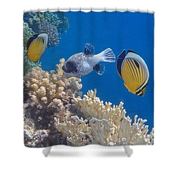 The Red Sea Underwater World Shower Curtain
