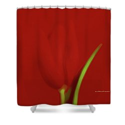 The Red Tulip Art Photograph 2 Shower Curtain