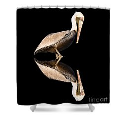 The Reflection Of A Pelican Shower Curtain