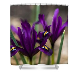 The Rise Of The Early Royal Dwarf Iris Shower Curtain by Dan Hefle