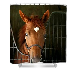 Shower Curtain featuring the photograph The Roan by Cathy Harper