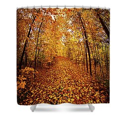 The Road Never Traveled Shower Curtain by Phil Koch