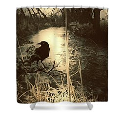 The Robin And The Wren Are Flown. Winter Crow Shower Curtain