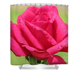 The Rose Shower Curtain by Amanda Barcon