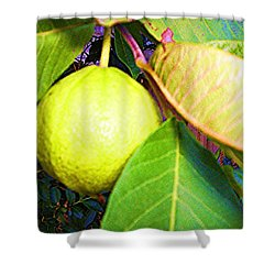 The Rose Apple Shower Curtain