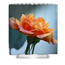 The Rose From Side Shower Curtain