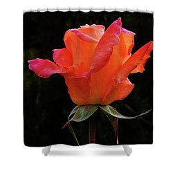 The Rose Shower Curtain by Mark Blauhoefer