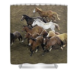 The Roundup Shower Curtain