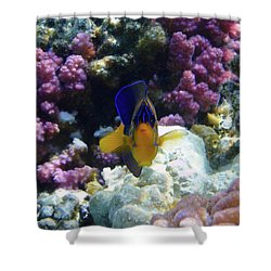 The Royal Angelfish Shower Curtain