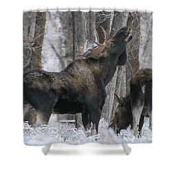 The Rut Shower Curtain by Gary Hall