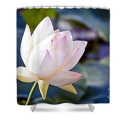 The Sacred Lotus Shower Curtain by Sharon Mau