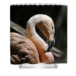 The Sacred Old Flamingoes Shower Curtain by Lois Bryan