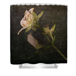 Shower Curtain featuring the photograph The Scent Of Jasmines by Randi Grace Nilsberg