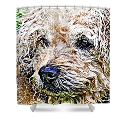The Scruffiest Dog In The World Shower Curtain by Meirion Matthias