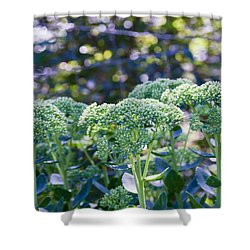 The Sedum Forest Shower Curtain