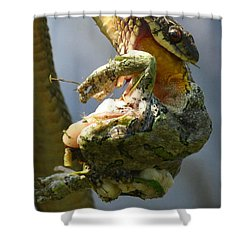 The Serpent And The Frog Shower Curtain